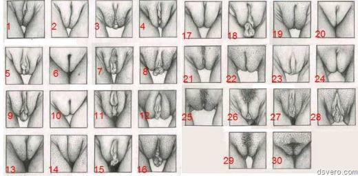 класификации женской письки